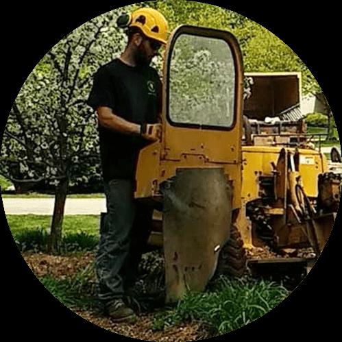 Clean Cut Tree Experts
